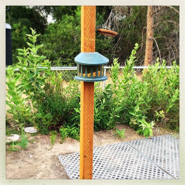 Squirrel feeder garden post