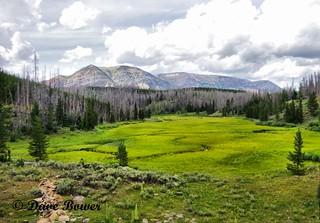 Wonderfull Wyoming
