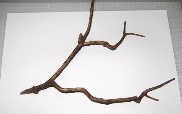 640x400 Twig