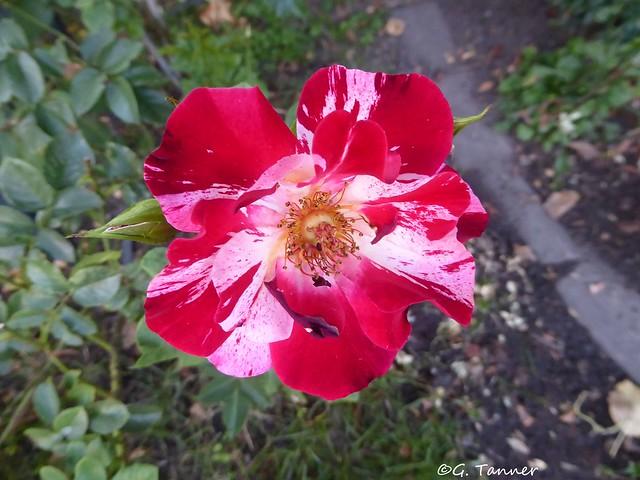 Garten Juli 2019 -