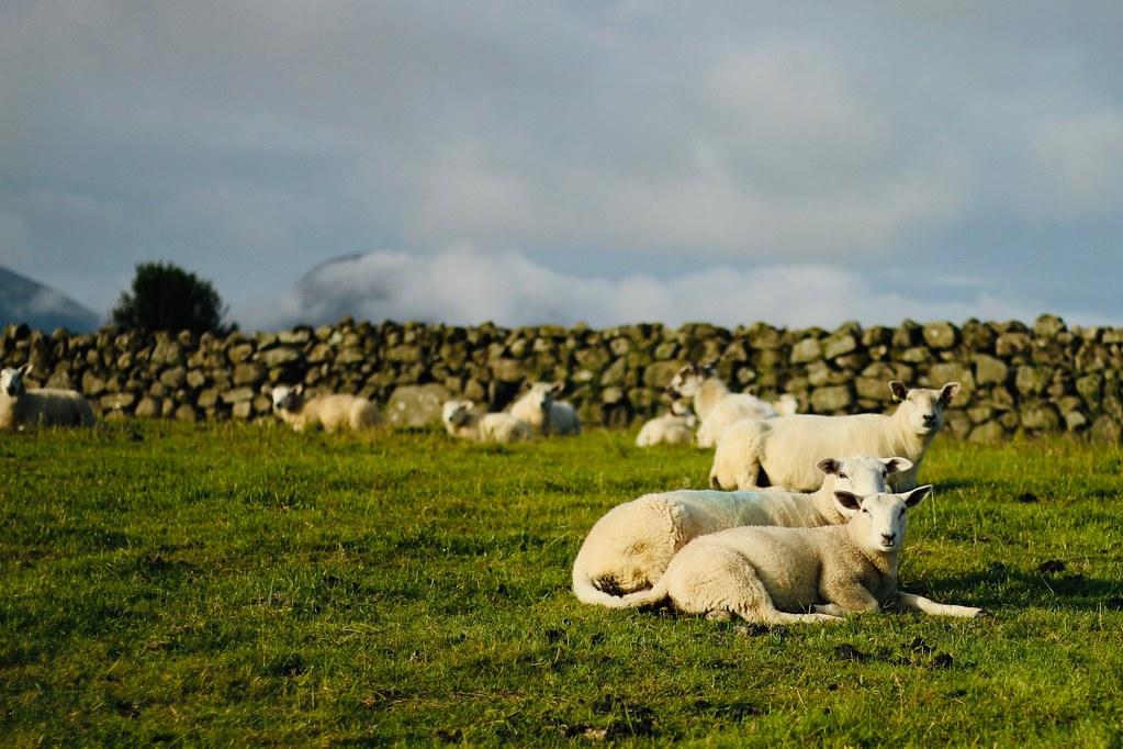Greenhill Farm: #Farm24