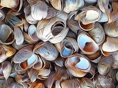 """""""Shells"""""""