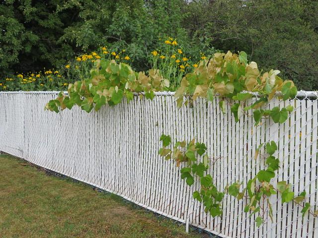 ** Une clôture joliment décorée **