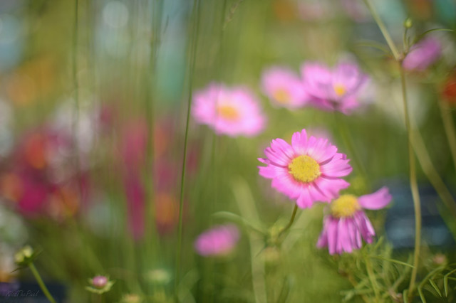 The Meadow...