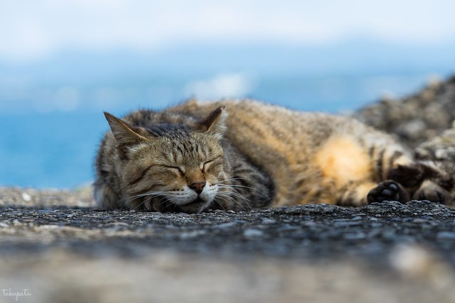 猫さん a cat