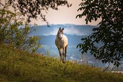 Pferde_Mauthausen_Sigma_600-6412