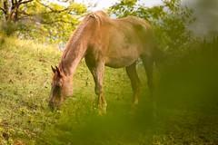 Pferde_Mauthausen_Sigma_600-6398