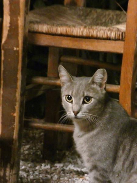 un autre chat