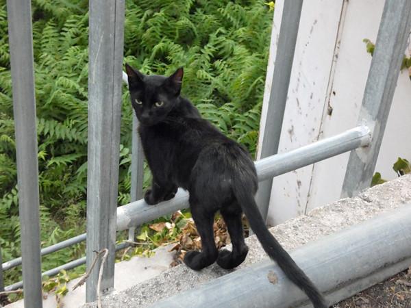 chat noir tout maigre