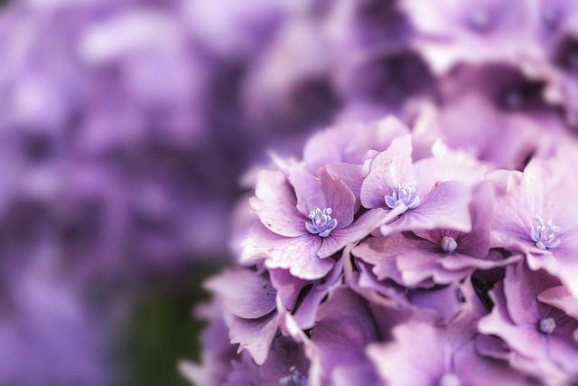 When in doubt add flowers...