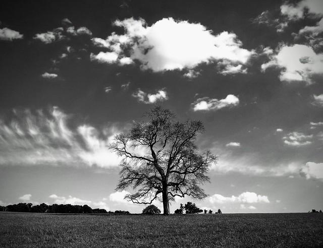 Beautiful tree