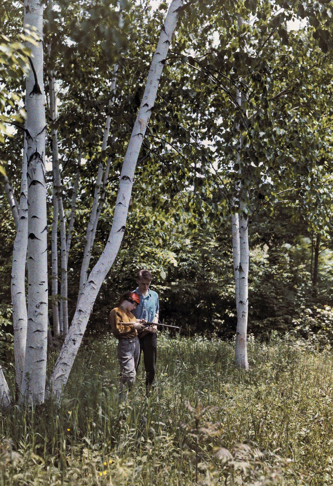 1927. Беннингтон, Вермонт – два человека стоят среди белых берез в долине Баттенкилл. Клифтон Р. Адамс
