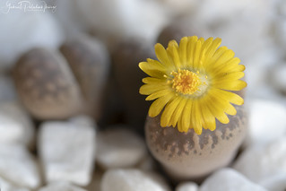 Flowering stones | by Gabriel Paladino Photography