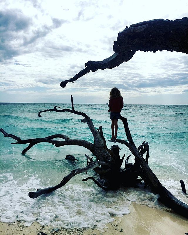 221/365 • Z on one of the several dead trees becoming driftwood on Lady Musgrave Island •