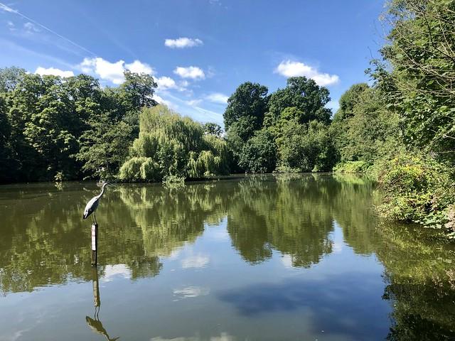Canons Park Lake  (Explored)