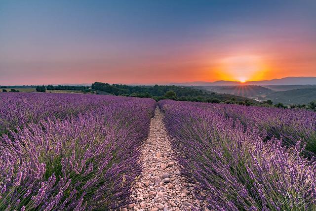 Sunrise sur Valensole (France)