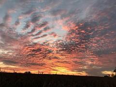 Sunrise over Triple J Farm #sunrise #farmlife #familyfarm #triplejfarmsc