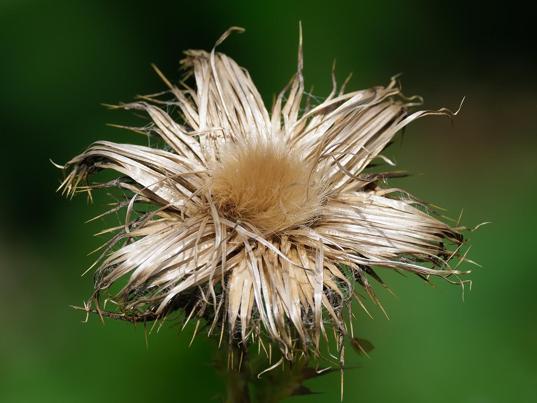 Seeds....