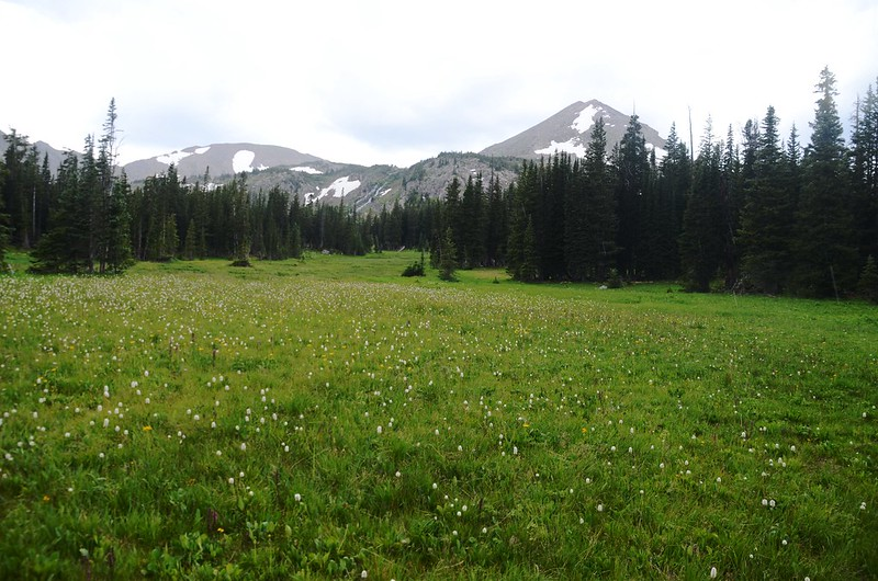 A large meadow Before Diamond Lake