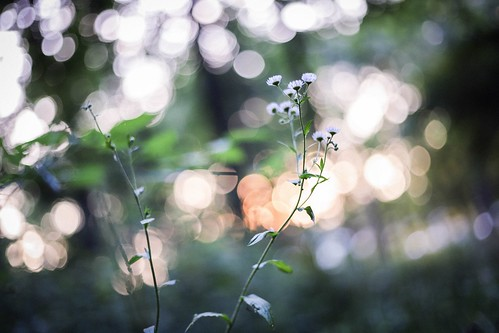 forest woods bushes grove trees green evening nature 50mmlens wildflowers