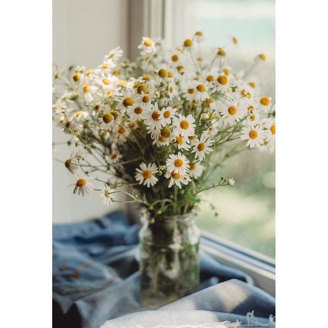 • daisies • summer • august •