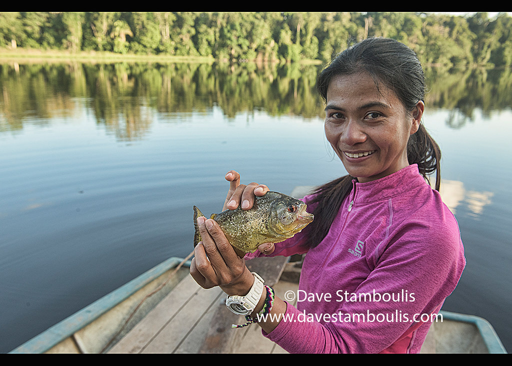 Fishing for yellow-bellied piranha on Lake Tres Chimbadas, Tambopata River, Peruvian Amazon