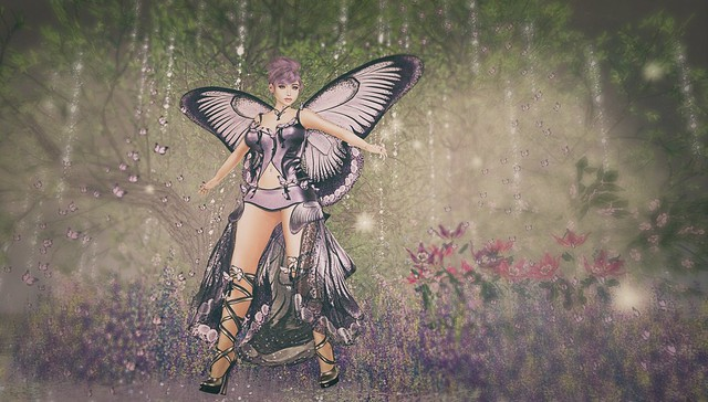 ↪ Papillon ↩