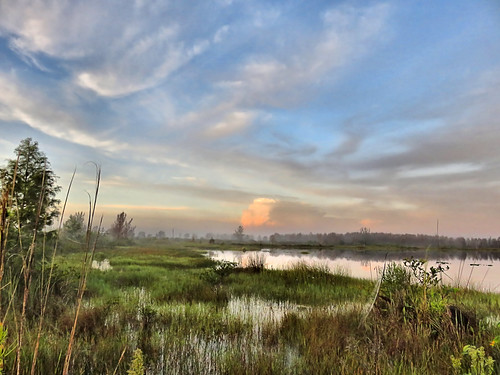 East lakeshore marsh 01-20190809