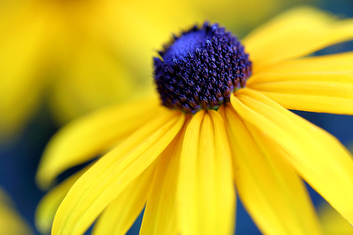 flower flowers garden nh newengland newhampshire pro canon eos macro close closeup