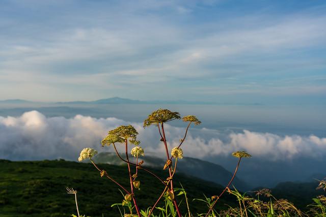 ミヤマトウキと月山