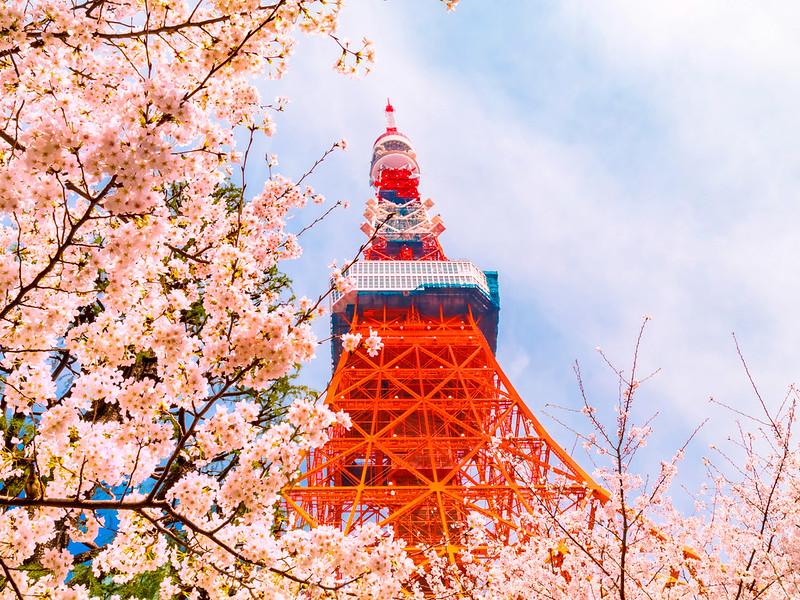 O Esplendor do Oriente – Japão com o Espetáculo da Florada das Cerejeiras e China