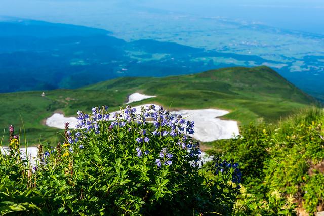 登って来た雪渓とハクサンシャジン@あざみ坂