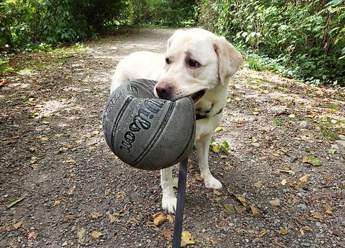 Gracie carrying her new ball