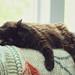 Solo Nap