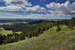Ponderosa Pines and Rolling Hills Along the Rankin Ridge Nature Trail (Wind Cave National Park)