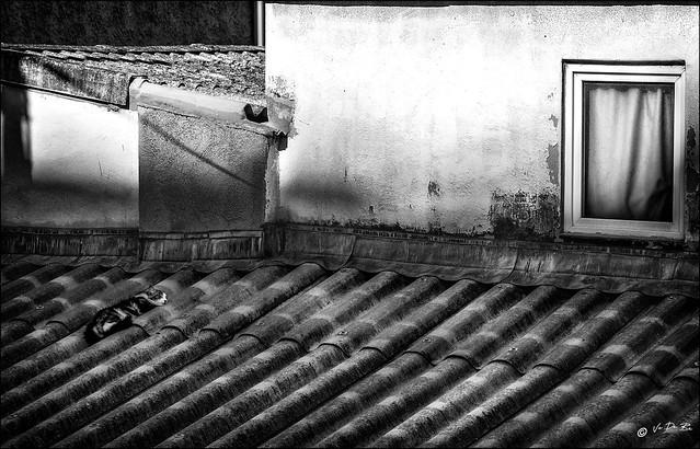La chatte sur un toit brûlant /  Cat on a hot tin roof