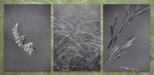 Wk 32 - Artistic Triptychs