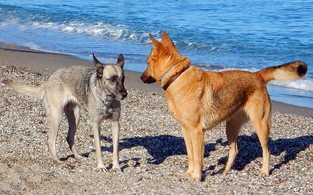 Meeting at the beach
