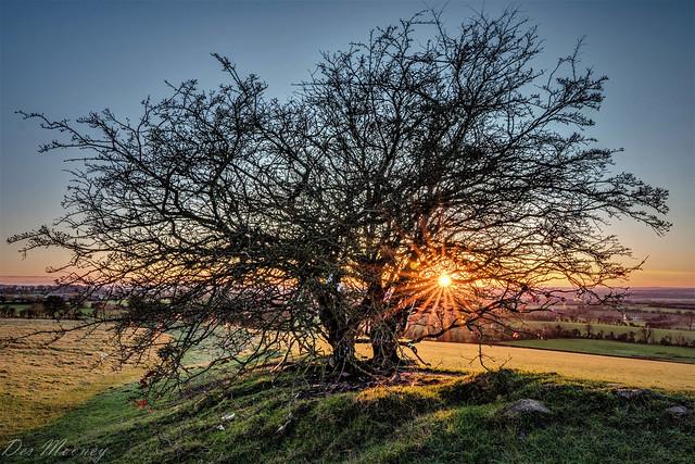 Fairy Tree at Sunset