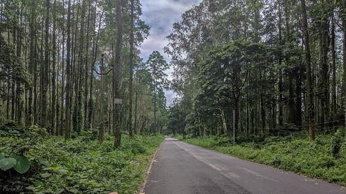 cycling gorubathan malforest road trekmarlin6