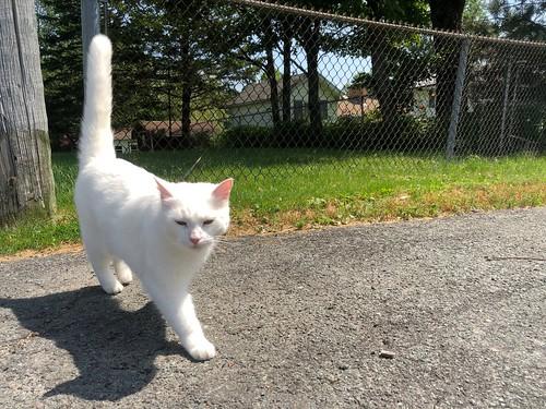 Neighbour cat outside