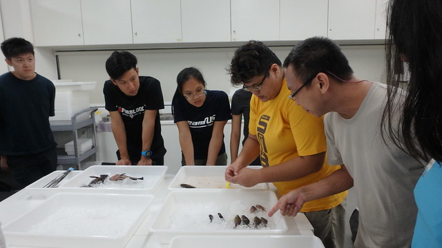 Singapore Marine Fishes Expedition 2019