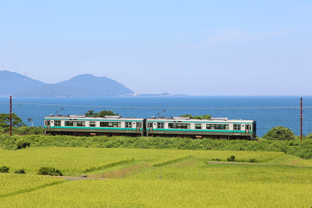 Rice field and local train