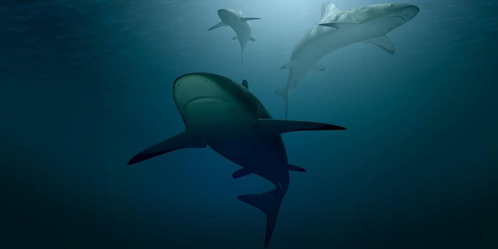 requin-brille-couleur-verte-processus-iconnu-de-la-science