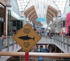 byddwch yn wyliadwrus o'r siarcod yn y ddinas /  beware the sharks in the city