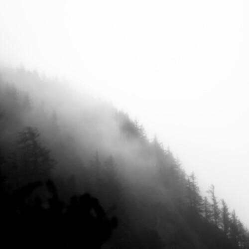 d5000 ecolastatepark nikon oregon pnw pacificnorthwest abstract coast coastline fog foggy forest hills landscape minimal minimalism mist misty natural noahbw rain rainforest sky spring square trees wet woods