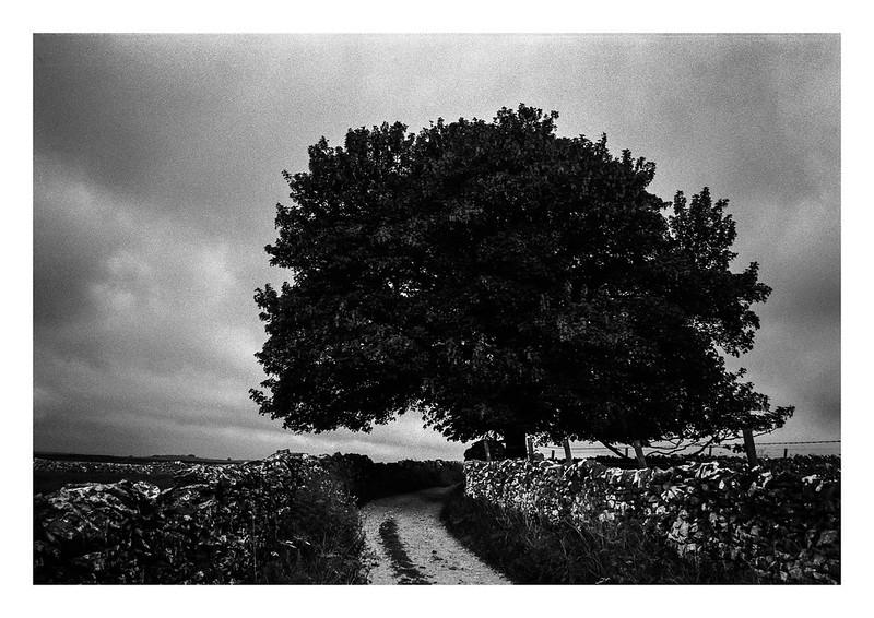 FILM - Lane beneath a tree
