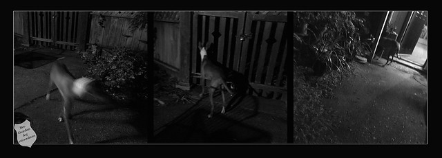 guardian dog extraordinare...