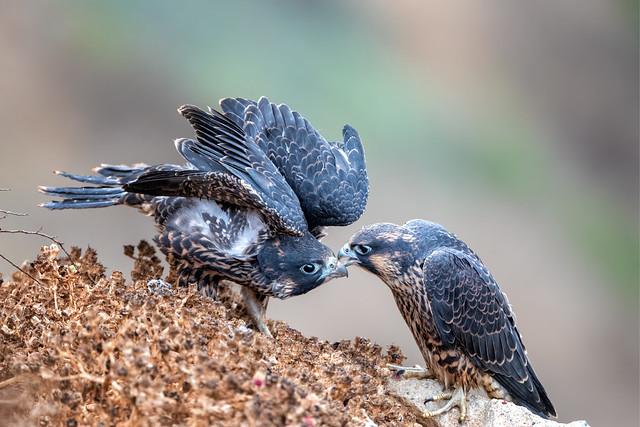 A Little Beak Bite