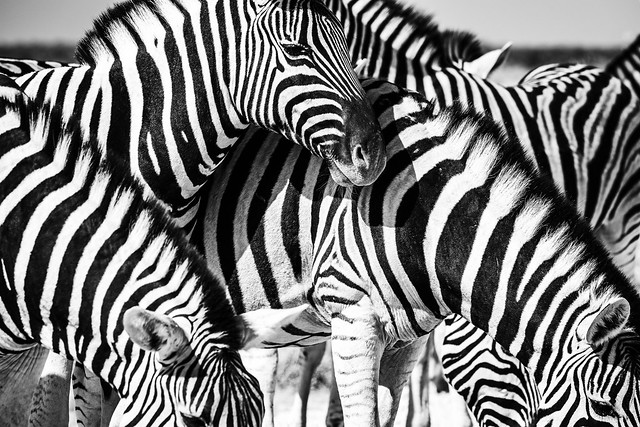 striped friends